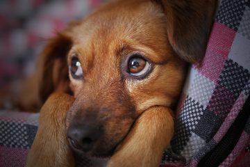 Blog-Pirat - Hund anschaffen