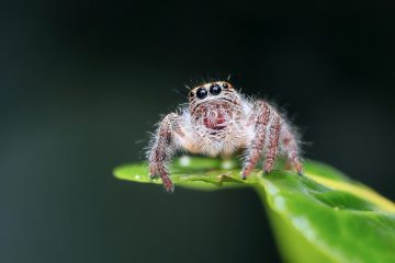Blog-Pirat Spider Man