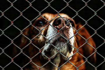 Hunde aus dem Tierheim - Blog-Pirat