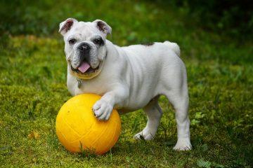 Hundespielzeug - Blog-Pirat