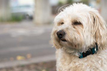 Hundeerziehung - Blog-Pirat