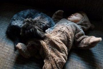 Kind und Hund - Blog-Pirat