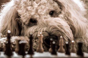 Hunde-Spiele für Zuhause