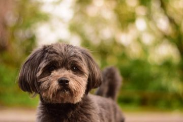 Apollo-Hund-Blog-Pirat