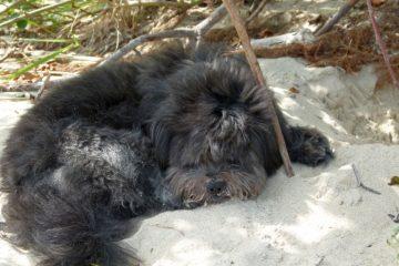Apollo-Hund-und-Lieblingstier