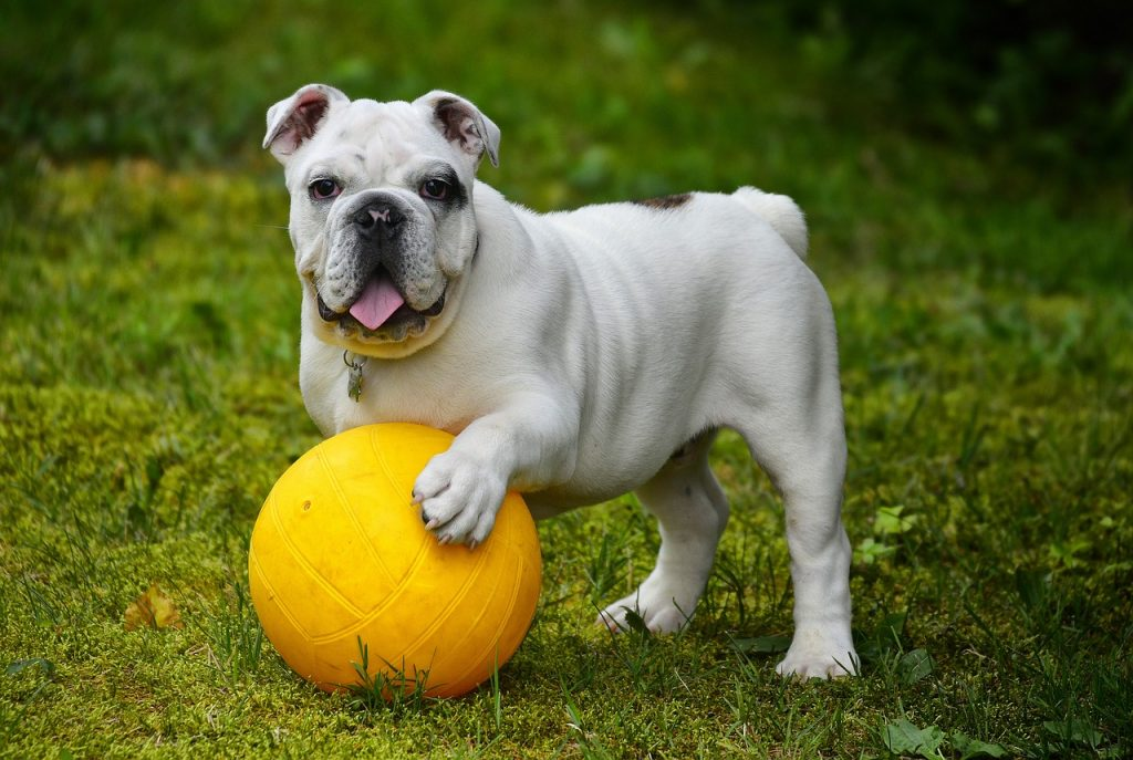 Hundespielzeug-Blog-Pirat