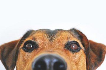 Dominanz Hundeerziehung