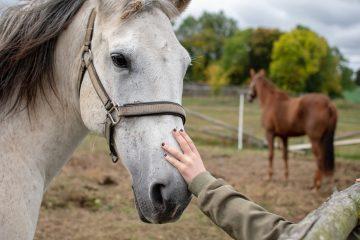 Pferde-brauchen-Schabracken