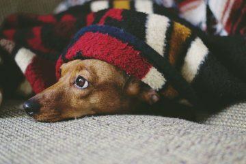 Hunde allein zu Haus